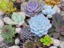 9 loại cây mang ý nghĩa phong thủy tốt nên trồng vào dịp cuối năm