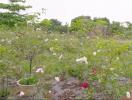 Vườn hồng ngoại ngập tràn hương sắc ở ngoại ô Hà Nội