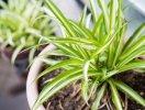 Gọi tên 10 loại cây lọc không khí trong nhà tốt nhất hiện nay